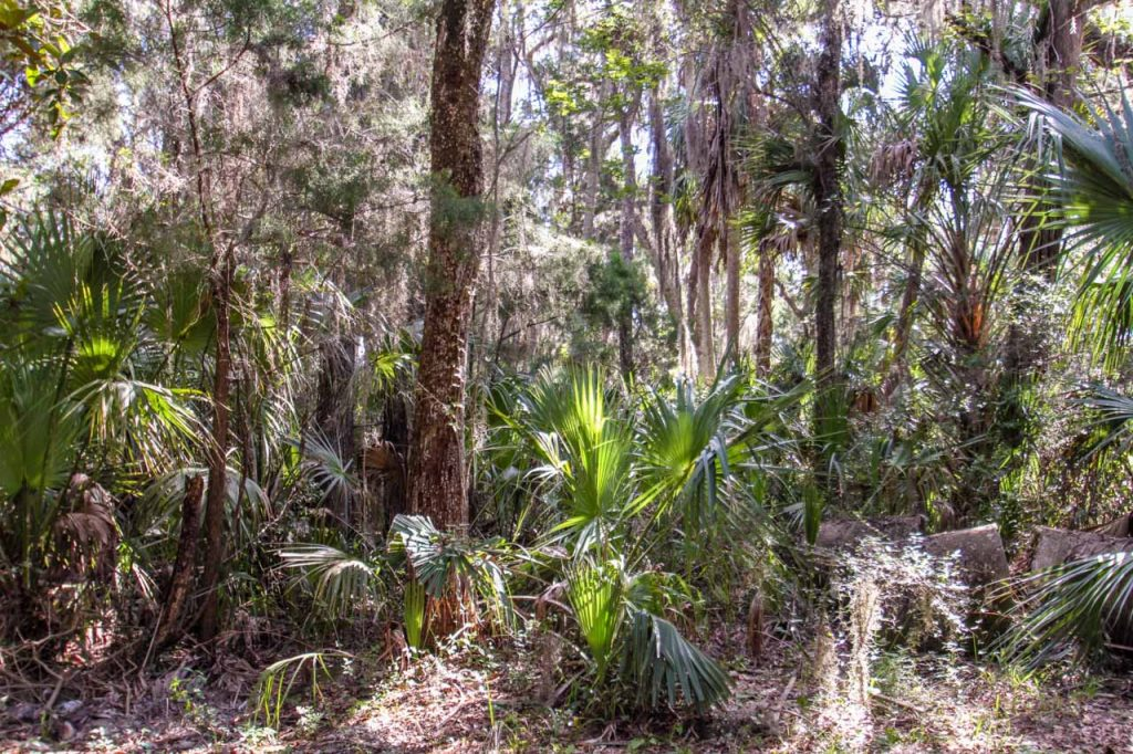 Home for Sale, Listing Photo, Spring Park Court 11265, Citrus County, Homosassa, Florida, 3448